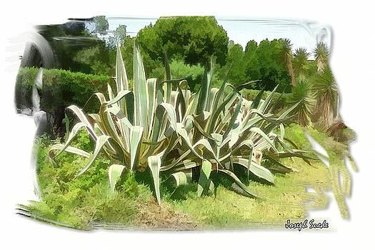 DO-00335 Plant Bois Des Pins by Digital Oil
