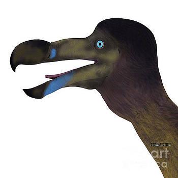 Corey Ford - Dodo Bird Head
