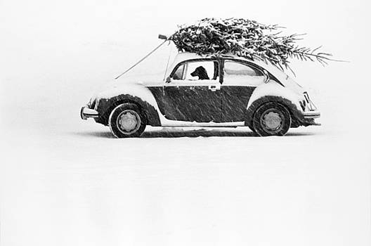 Ulrike Welsch and Photo Researchers - Dog in Car