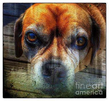 Dog Mug  by Steven Digman