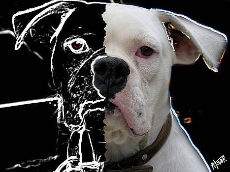 Dog Sense by Alejandro Tovar