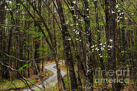 Dogwood and Country Road by Thomas R Fletcher