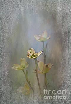 Dogwood Blooms by Brenda Bostic