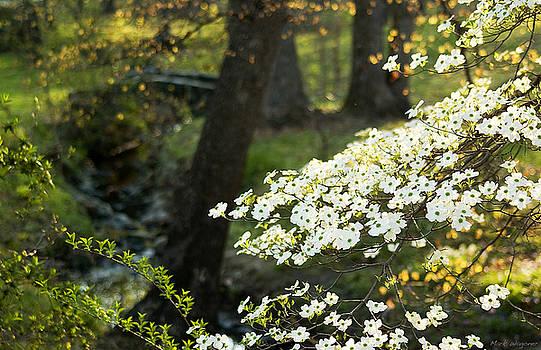 Dogwood Blossoms by Mark Wagoner