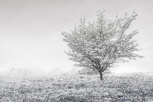Debra and Dave Vanderlaan - Dogwood in the Mists Black and White