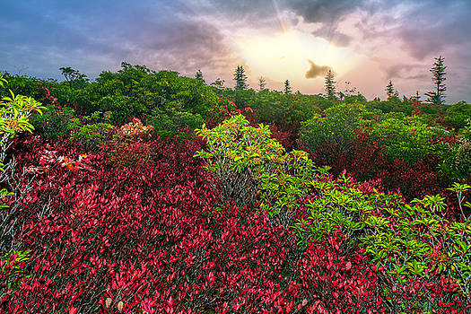 Dolly Sods Sunbeams by Mary Almond