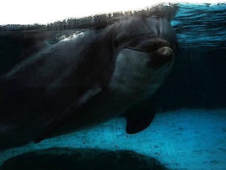 Linda Knorr Shafer - Dolphin Blue