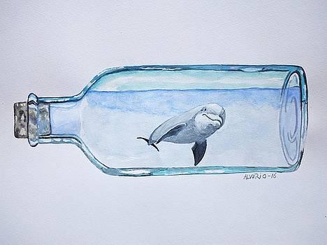 Dolphin in a Bottle by Edwin Alverio