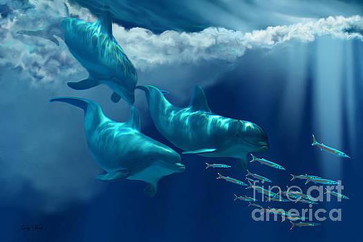 Corey Ford - Dolphin World