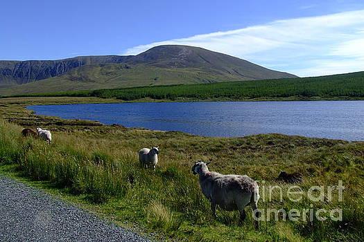 Joe Cashin - Donegal landscape