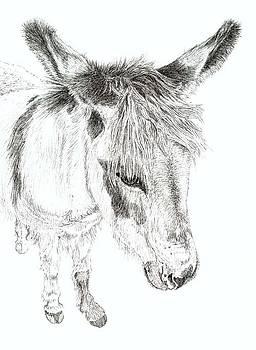 Donkey 3 by Keran Sunaski Gilmore