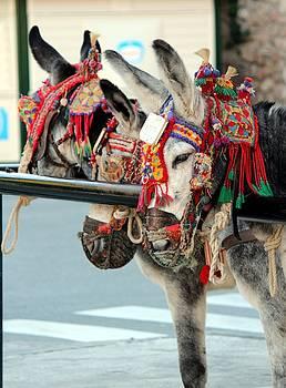 Donkeys in Mijas  by Shiladitya Sinha