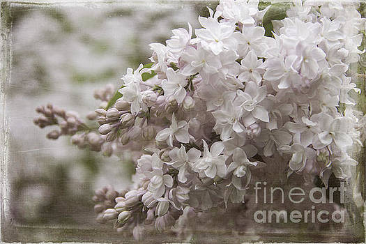 Double Bloom Pink Lilac by Cindi Ressler