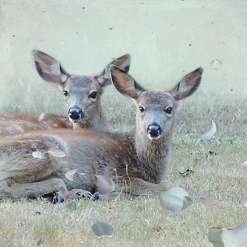 Double Gaze by Sally Banfill