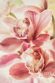 Double Sweetness by Kim Andelkovic