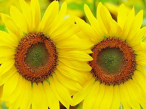 Double Your Sunshine by Lori Frisch