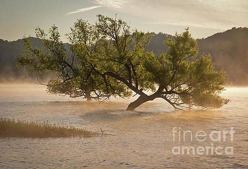 Douglas Lake Tree by Douglas Stucky
