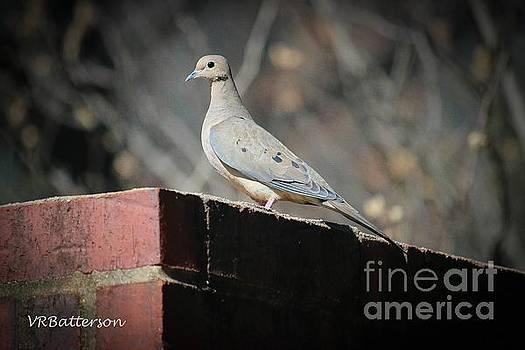 Dove  by Veronica Batterson