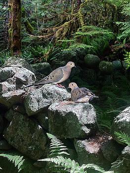 Doves on Stone Fence by Matthew Schwartz