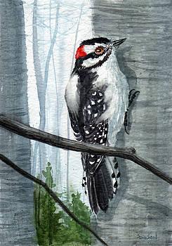 Downey Woodpecker by Sean Seal