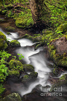 Downstream From The Waterfalls by Madonna Martin