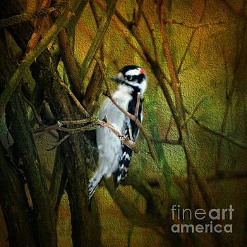 Downy Woodpecker by Judy Palkimas