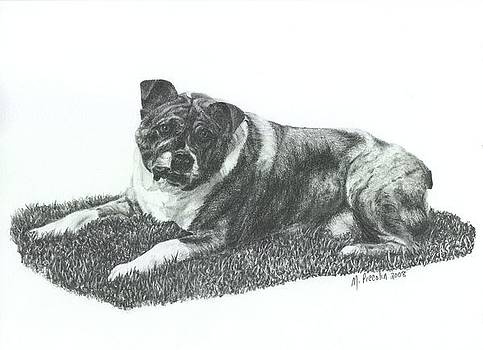Dozer by Marlene Piccolin