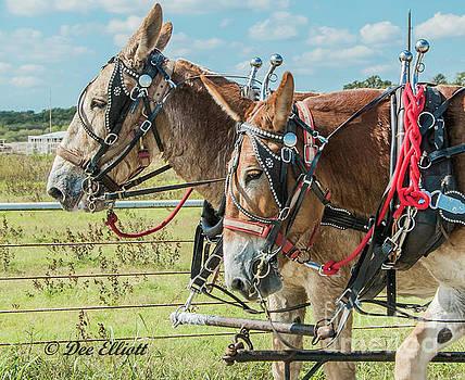 Draft mules by Dee Elliott