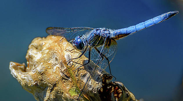 Dragon Fly by Jerry Cahill