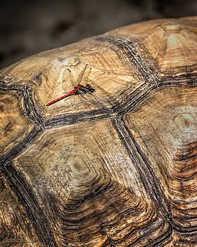 LeeAnn McLaneGoetz McLaneGoetzStudioLLCcom - Dragon Turtle