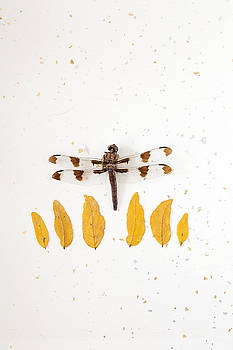 Dragonfly and Honey Locust Leaves by Bernice Williams