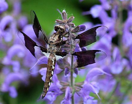 Rosanne Jordan - Dragonfly Beauty