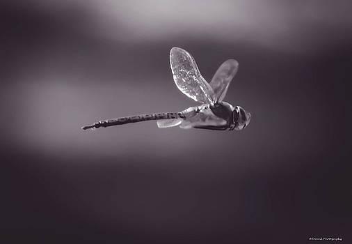 Dragonfly BW by Debra Forand