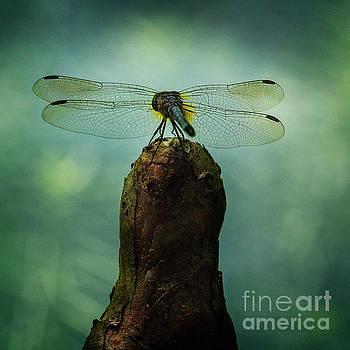 Dragonfly Dreams by Doug Sturgess