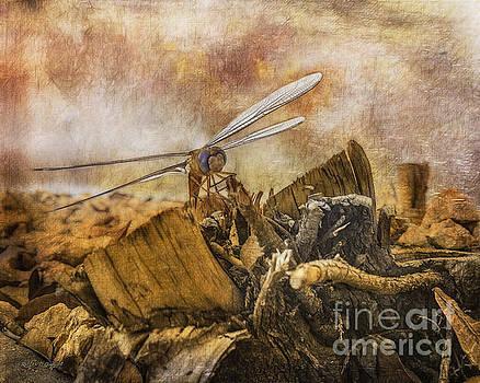 Rhonda Strickland - Dragonfly Dreams