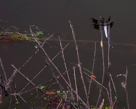 Dragonfly Duo II by Anna Villarreal Garbis