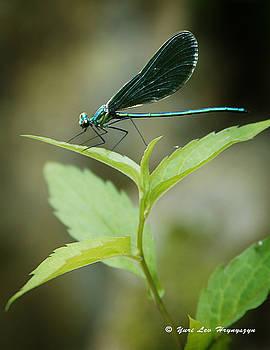 Dragonfly on a leaf by Yuri Lev