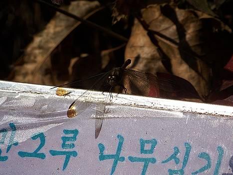 Dragonfly Resting by Kurt Schmitt