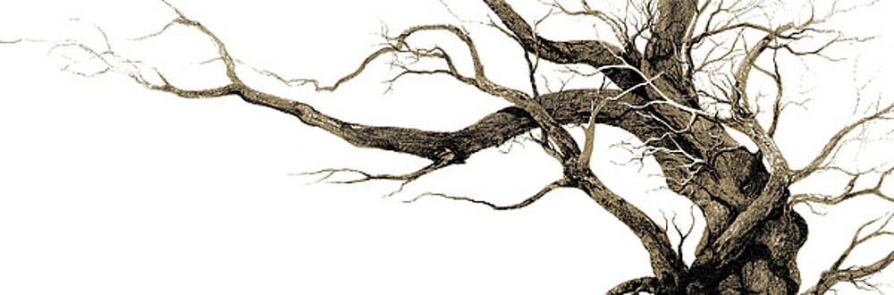 Drawing From Inside A Tree by Jay Garfinkle