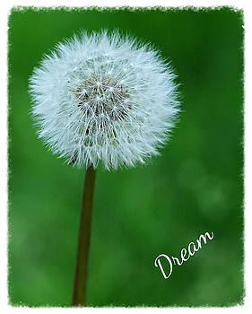 Dream by Marilyn Peterson