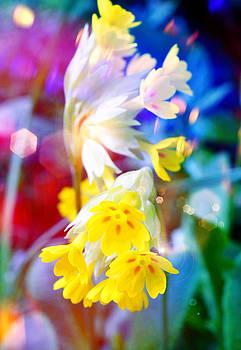 Dream of yellow flowers by Mikko Tyllinen