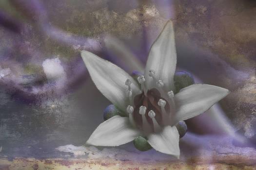 Dreaming a Pastel Life by Koji Kanemoto