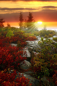 Dreaming in Color by Lj Lambert