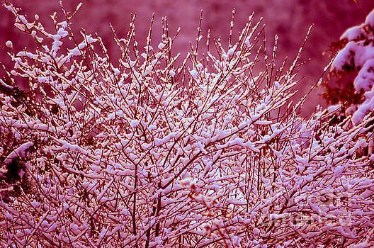 Susanne Van Hulst - Dreaming in red - Winter Wonderland