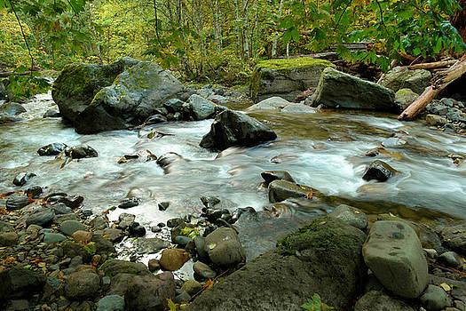 Dreaming in the water moss and rocks  by Jeff Swan