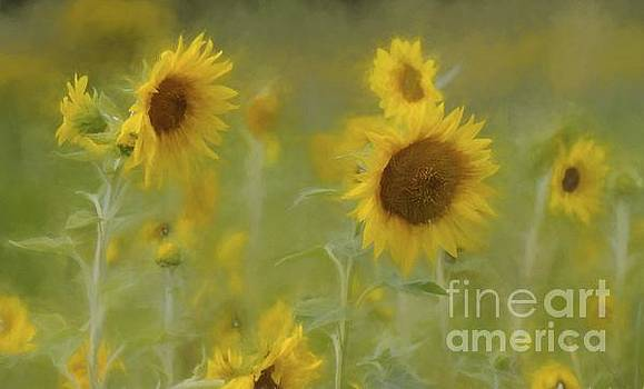 Dreaming of Sunflowers by Benanne Stiens