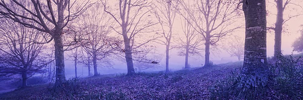 Debra and Dave Vanderlaan - Dreams in the Mist
