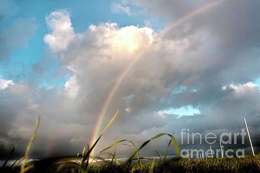 Dreams Of A Rainbow by Janie Johnson
