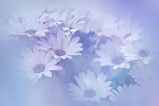 Jenny Rainbow - Dreamy Daisies