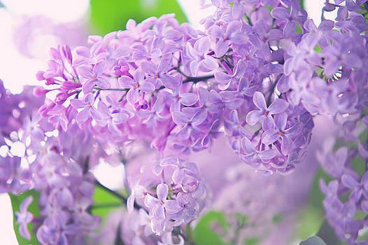 Jenny Rainbow - Dreamy Lilac